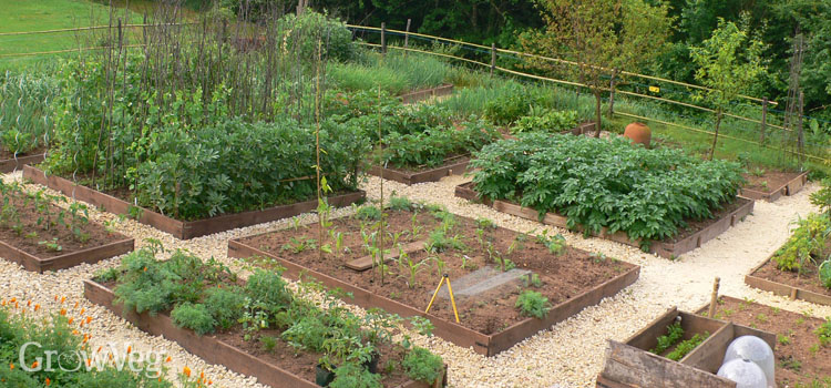 How to Plan a Vegetable Garden: A Step-by-Step Gui