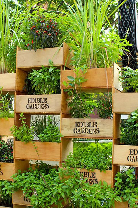 35 Creative Ways to Plant a Vertical Garden - How to Make a .
