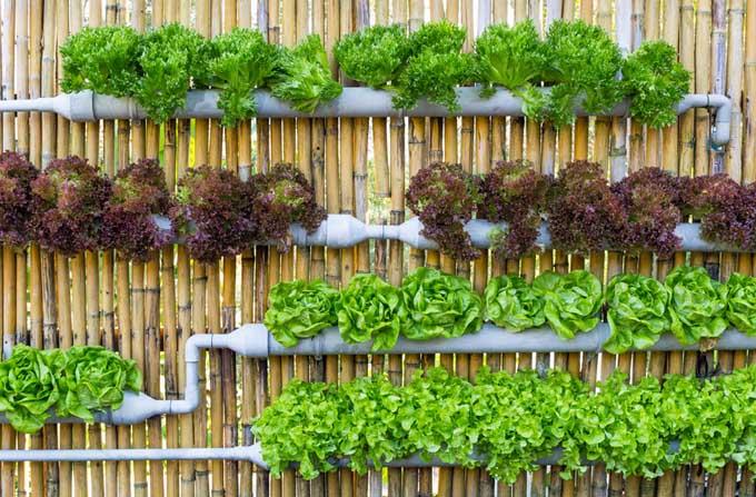 How to Create a Vertical Garden   Gardener's Pa