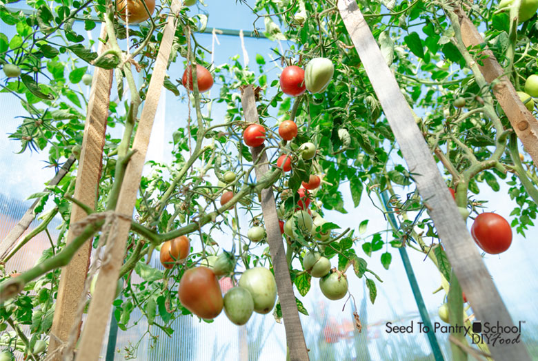 Vertical Garden Ideas In A Hoop House - Seed To Pantry Scho