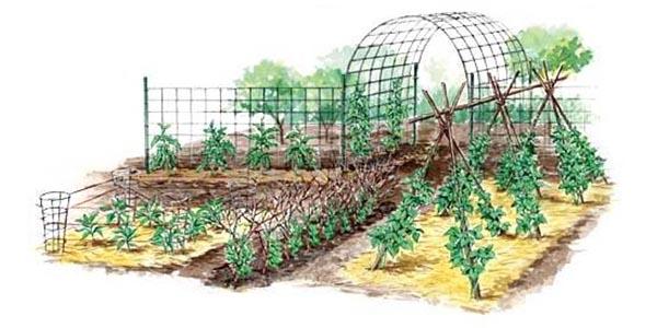 Vertical Gardening Techniques for Maximum Returns   MOTHER EARTH NE