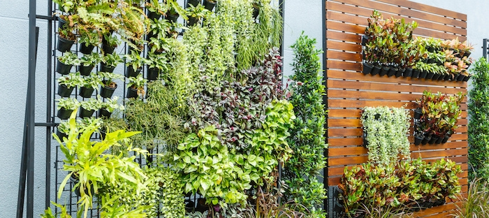 Top 10 Reasons to Grow a Vertical Garden - Dave's Gard